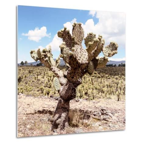 ?Viva Mexico! Square Collection - Cactus Desert IV-Philippe Hugonnard-Metal Print