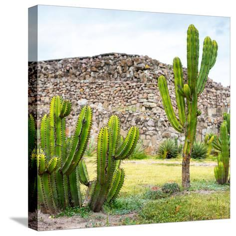 ¡Viva Mexico! Square Collection - Mexican Cactus II-Philippe Hugonnard-Stretched Canvas Print