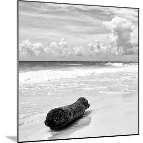 ¡Viva Mexico! Square Collection - Tree Trunk on a Caribbean Beach II-Philippe Hugonnard-Mounted Photographic Print