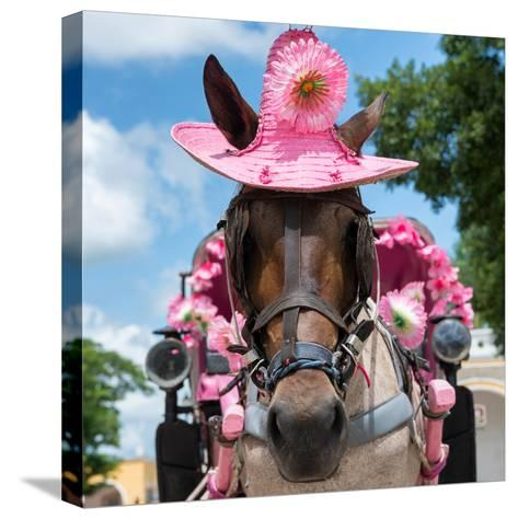 ¡Viva Mexico! Square Collection - Horse with a Pink Hat-Philippe Hugonnard-Stretched Canvas Print