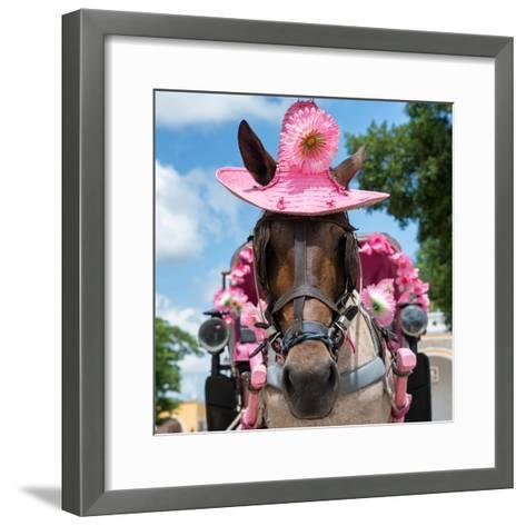 ¡Viva Mexico! Square Collection - Horse with a Pink Hat-Philippe Hugonnard-Framed Art Print