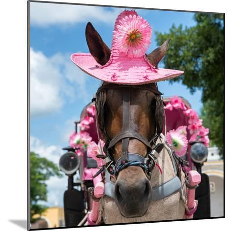 ¡Viva Mexico! Square Collection - Horse with a Pink Hat-Philippe Hugonnard-Mounted Photographic Print