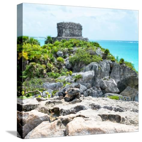 ¡Viva Mexico! Square Collection - Tulum Ruins along Caribbean Coastline with Iguana III-Philippe Hugonnard-Stretched Canvas Print