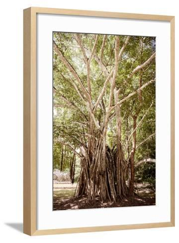 ¡Viva Mexico! Collection - Tree Centenary-Philippe Hugonnard-Framed Art Print