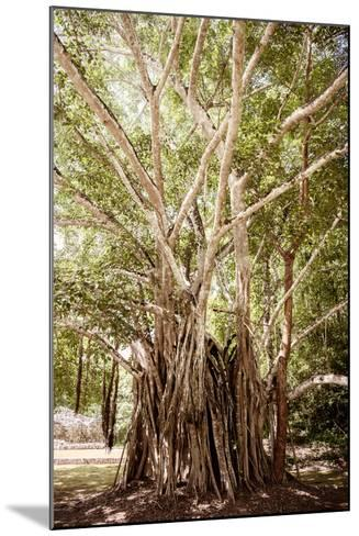 ¡Viva Mexico! Collection - Tree Centenary-Philippe Hugonnard-Mounted Photographic Print