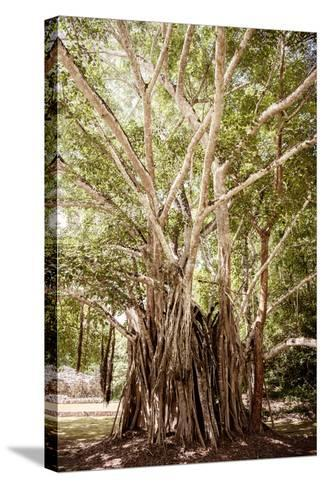 ¡Viva Mexico! Collection - Tree Centenary-Philippe Hugonnard-Stretched Canvas Print