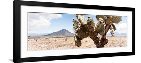 ¡Viva Mexico! Panoramic Collection - Desert Cactus III-Philippe Hugonnard-Framed Art Print
