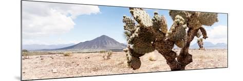 ¡Viva Mexico! Panoramic Collection - Desert Cactus III-Philippe Hugonnard-Mounted Photographic Print