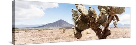 ¡Viva Mexico! Panoramic Collection - Desert Cactus III-Philippe Hugonnard-Stretched Canvas Print