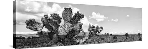 ¡Viva Mexico! Panoramic Collection - Desert Cactus VI-Philippe Hugonnard-Stretched Canvas Print