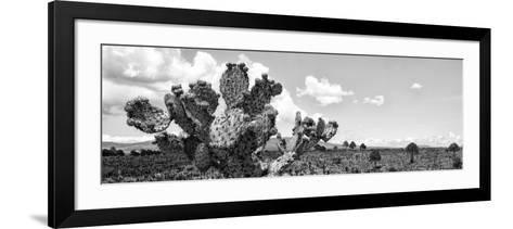 ¡Viva Mexico! Panoramic Collection - Desert Cactus VI-Philippe Hugonnard-Framed Art Print