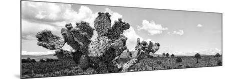 ¡Viva Mexico! Panoramic Collection - Desert Cactus VI-Philippe Hugonnard-Mounted Photographic Print