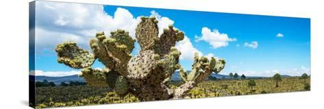 ¡Viva Mexico! Panoramic Collection - Desert Cactus VII-Philippe Hugonnard-Stretched Canvas Print