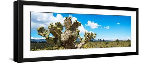 ¡Viva Mexico! Panoramic Collection - Desert Cactus VII-Philippe Hugonnard-Framed Art Print