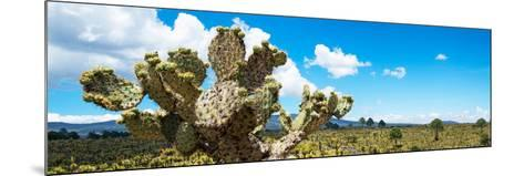 ¡Viva Mexico! Panoramic Collection - Desert Cactus VII-Philippe Hugonnard-Mounted Photographic Print