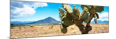 ¡Viva Mexico! Panoramic Collection - Desert Cactus II-Philippe Hugonnard-Mounted Photographic Print