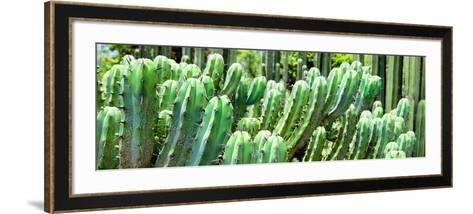 ¡Viva Mexico! Panoramic Collection - Cactus-Philippe Hugonnard-Framed Art Print