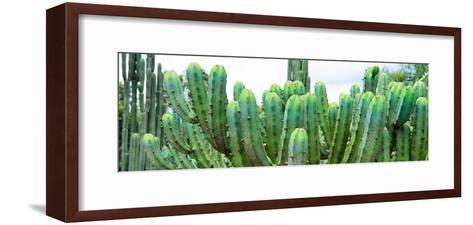 ?Viva Mexico! Panoramic Collection - Cactus I-Philippe Hugonnard-Framed Art Print