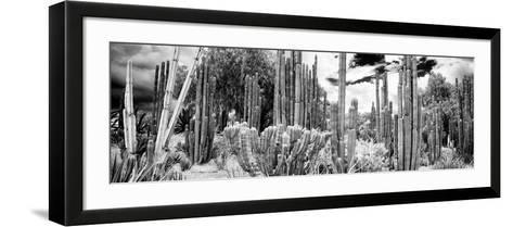 ¡Viva Mexico! Panoramic Collection - Cardon Cactus IV-Philippe Hugonnard-Framed Art Print