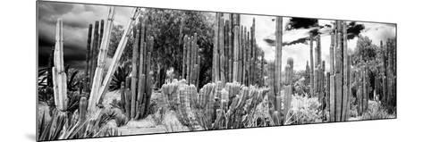 ¡Viva Mexico! Panoramic Collection - Cardon Cactus IV-Philippe Hugonnard-Mounted Photographic Print