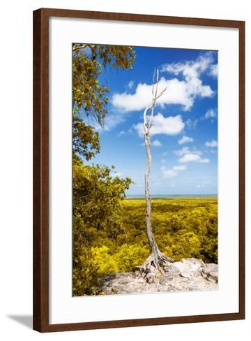¡Viva Mexico! Collection - Tree in the Mexican Jungle II - Calakmul-Philippe Hugonnard-Framed Art Print
