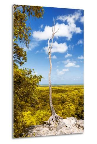 ¡Viva Mexico! Collection - Tree in the Mexican Jungle II - Calakmul-Philippe Hugonnard-Metal Print