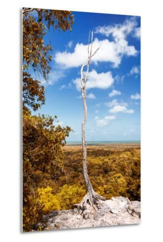 ¡Viva Mexico! Collection - Tree in the Mexican Jungle with Fall Colors - Calakmul-Philippe Hugonnard-Metal Print
