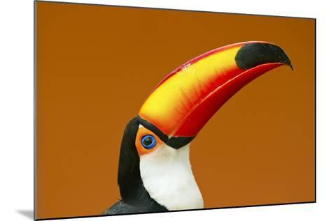 Toco Toucan (Ramphastos Toco) Head And Beak Profile Portrait, Brazil-Angelo Gandolfi-Mounted Photographic Print