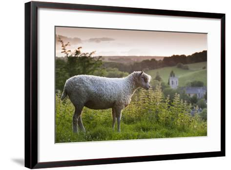 Cotswolds Lion Rare Breed Sheep (Ovis Aries) And The Village Of Naunton At Sunset-Nick Turner-Framed Art Print