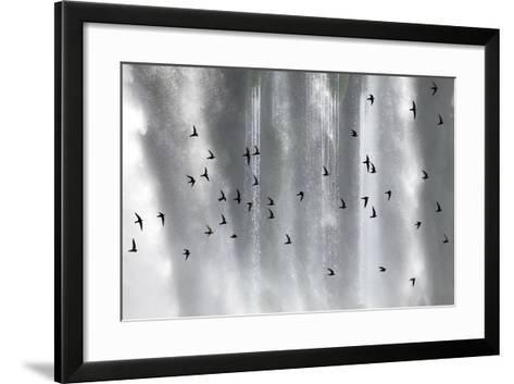 Great Dusky Swift (Cypseloides Senex) Flock In Front Of Iguazu Falls-Angelo Gandolfi-Framed Art Print