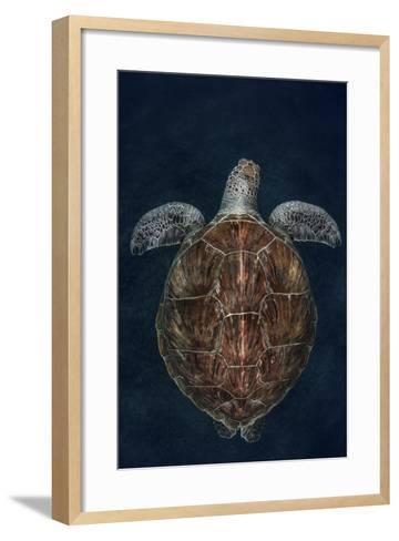 Juvenile Green Turtle (Chelonia Mydas) Armenime Cove, South Tenerife, Canary Island, Atlantic Ocean-Jordi Chias-Framed Art Print