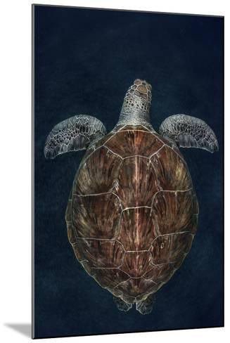 Juvenile Green Turtle (Chelonia Mydas) Armenime Cove, South Tenerife, Canary Island, Atlantic Ocean-Jordi Chias-Mounted Photographic Print
