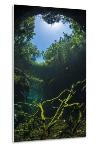 Old Tree Branches On The Floor Of Cenote Pool, Beneath The Forest Canopy With Snell'S Window Effect-Alex Mustard-Metal Print