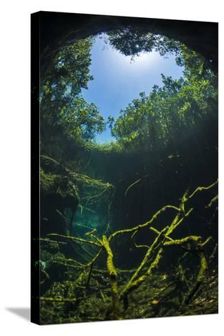 Old Tree Branches On The Floor Of Cenote Pool, Beneath The Forest Canopy With Snell'S Window Effect-Alex Mustard-Stretched Canvas Print