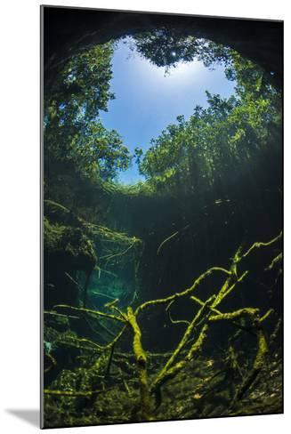 Old Tree Branches On The Floor Of Cenote Pool, Beneath The Forest Canopy With Snell'S Window Effect-Alex Mustard-Mounted Photographic Print