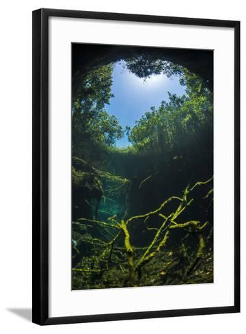 Old Tree Branches On The Floor Of Cenote Pool, Beneath The Forest Canopy With Snell'S Window Effect-Alex Mustard-Framed Art Print