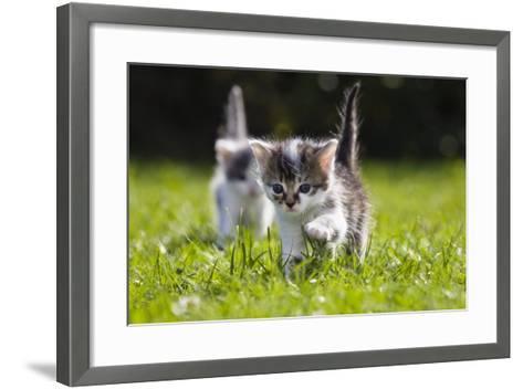 Kittens Exploring Garden Lawn, Germany-Konrad Wothe-Framed Art Print