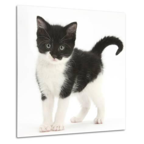 Black-And-White Kitten Standing, Against White Background Digitally Enhanced-Mark Taylor-Metal Print