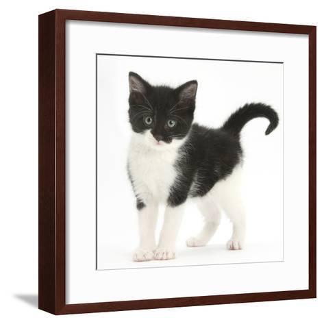 Black-And-White Kitten Standing, Against White Background Digitally Enhanced-Mark Taylor-Framed Art Print