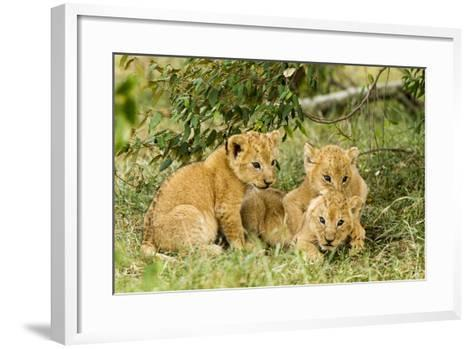 Lion (Panthera Leo) Cubs Playing, Masai Mara Game Reserve, Kenya-Denis-Huot-Framed Art Print