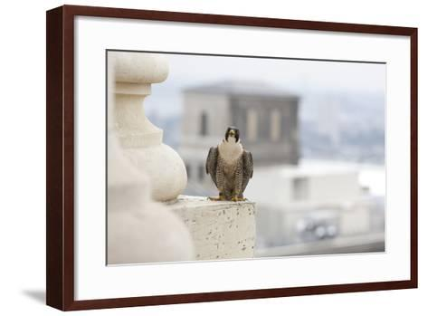 Peregrine Falcon (Falco Peregrinus) Perched On City Hall, Philadelphia, Pennsylvania, USA, May-Doug Wechsler-Framed Art Print