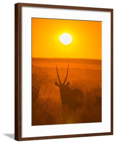 Gemsbok (Oryx Gazella) Silhouetted At Dawn, Kalahari Desert, Botswana-Juan Carlos Munoz-Framed Art Print