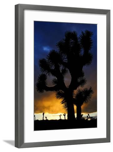 Silhouettte Of Joshua Tree (Yucca Brevifolia) At Sunset, Joshua Tree National Park, Mojave Desert-Jouan Rius-Framed Art Print