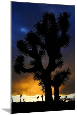 Silhouettte Of Joshua Tree (Yucca Brevifolia) At Sunset, Joshua Tree National Park, Mojave Desert-Jouan Rius-Mounted Photographic Print