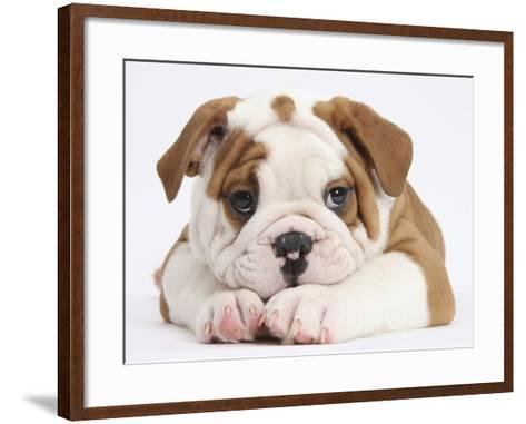 Bulldog Puppy With Chin On Paws, Against White Background-Mark Taylor-Framed Art Print