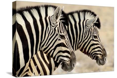 Burchell'S Zebras (Equus Quagga Burchellii) Standing Side By Side. Etosha Np, Namibia-Enrique Lopez-Tapia-Stretched Canvas Print