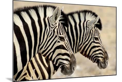 Burchell'S Zebras (Equus Quagga Burchellii) Standing Side By Side. Etosha Np, Namibia-Enrique Lopez-Tapia-Mounted Photographic Print