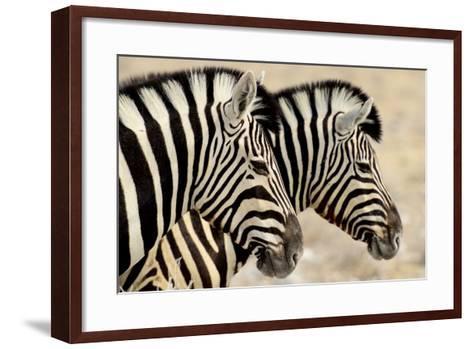 Burchell'S Zebras (Equus Quagga Burchellii) Standing Side By Side. Etosha Np, Namibia-Enrique Lopez-Tapia-Framed Art Print