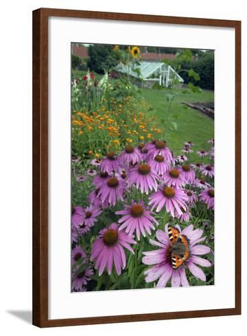 Small Tortoisehell Butterfly (Aglais Urticae)-Ernie Janes-Framed Art Print