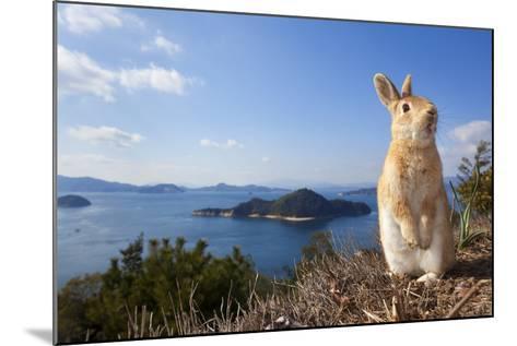 Feral Domestic Rabbit (Oryctolagus Cuniculus) Standing On Hind Legs On Coast-Yukihiro Fukuda-Mounted Photographic Print